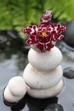 l'eau et l'orchidée