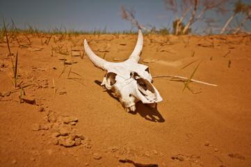 Crâne dans désert