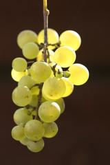 leckere Weintrauben im Gegenlicht