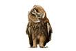 Leinwandbild Motiv owl isolated on white background