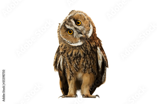 Foto op Plexiglas Uil owl isolated on white background