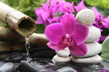 Orchidea różowa do spa salonu kosmetycznego