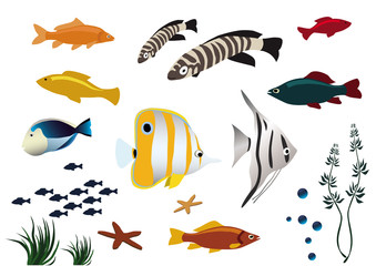 colorful tropical fishes on white background