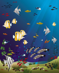 tropical fishes bottom of the ocean