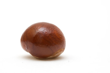 Conker isolated on white background