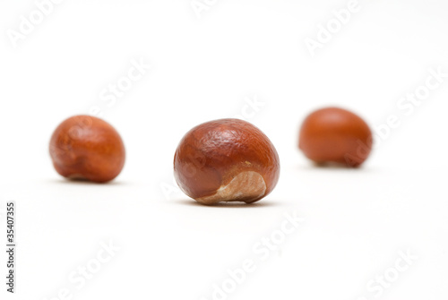 Conkers isolated on white background