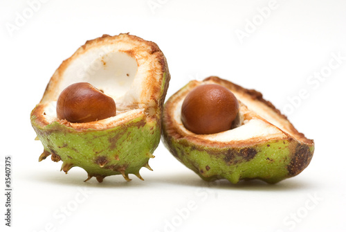 Acorns isolated on white background
