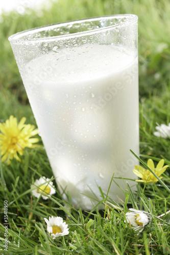 Verre de lait  frais dans l'herbe