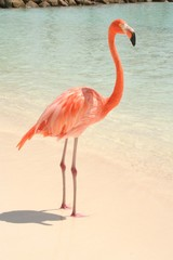 Beach Flamingo