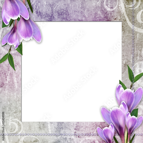 Framework for invitation or congratulation with crocus