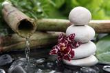 Fototapety Orchidée noire et galets blanc