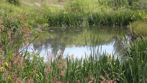 Beautiful Pond with Flowers on a Sunny Day