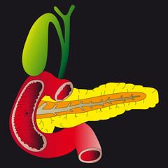 Human digestive organs_