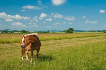Kasztanowy koń pasący się na zielonej łące