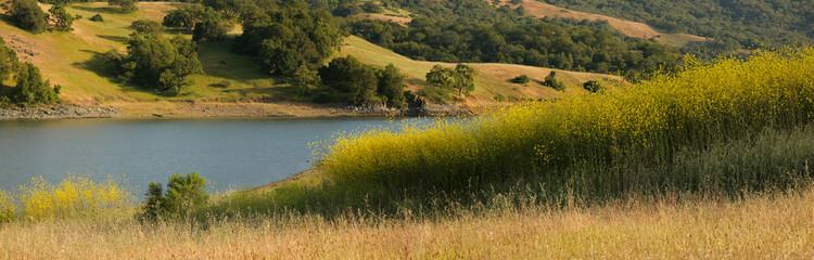 Panorama of mustard field and oak grassland in California