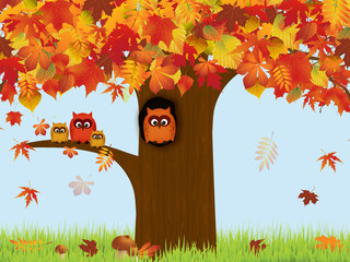 Autumn, tree, owls
