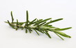 Rosemary on white background