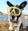 Hund mit Taucherbrille