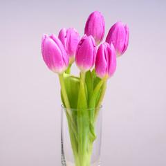 love of tulip