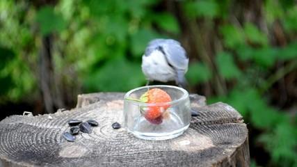 Птичка прилетела, а бурундук (chipmunk) всё уже съел