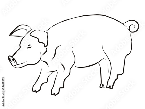 Schwein 003