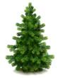 Pine tree - 35468505