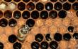 Abeille dans la ruche