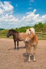 Konie stojące na wybiegu