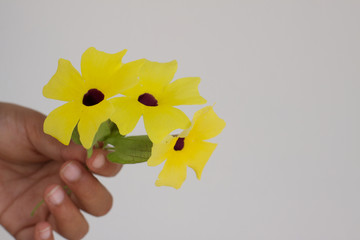 Bright yellow flowers in girl's hand