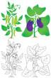 Pea and eggplant