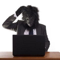 Confused gorilla in his office job, white background.
