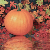 Pumpkin in autumn forest with reflection in river.