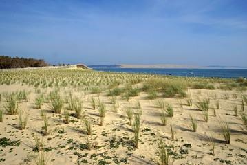 Oyat; Site protégé restauration des dunes; Cap Ferret, 33