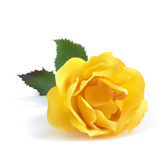 Rose yellow color