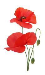 Poppy scarlet colour