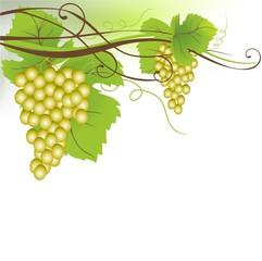 Weintrauben weiß | No 01