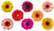 Set of gerberas