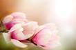 Fototapeta Kwiat - Lilia - Kwiat