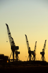Cranes silhouetted
