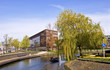 Amsterdam. Modern residential areas. Green Tree