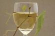 ein Glas Weißwein mit Laub