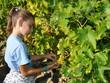 vendanges vigne enfant
