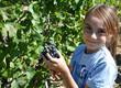 vendanges raisin vignes enfant récolte