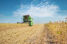 Kombajny do zbioru soi