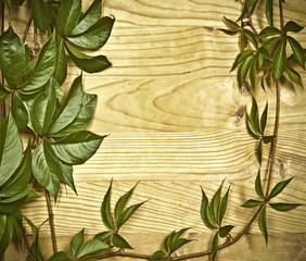 vine branch over old wooden background