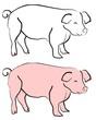 Schwein004