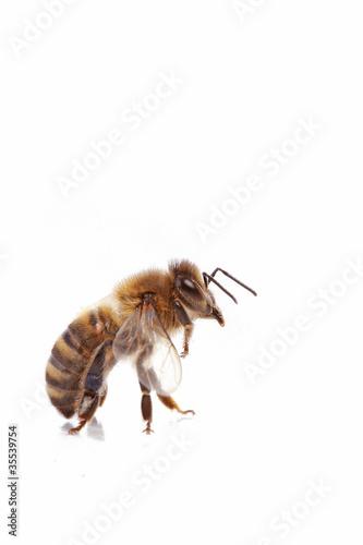 abeille Poster