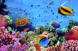 Fototapete Bahamas - Sprudel - Fische