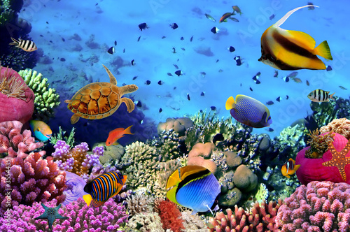 Poster Photo of a coral colony on a reef, Egypt