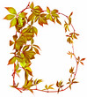 autumn vine branch - frame